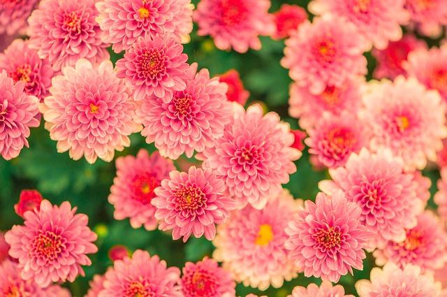 Hay muchas flores en el jardín