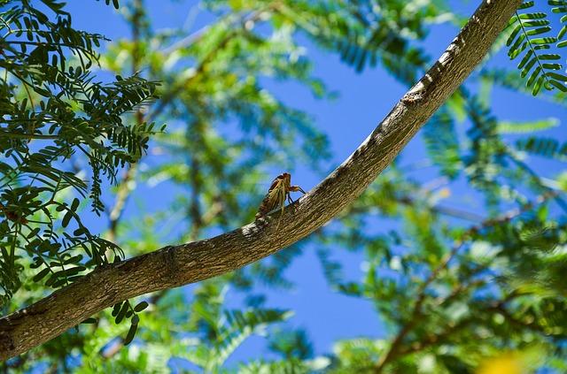 Ese insecto vive en los árboles