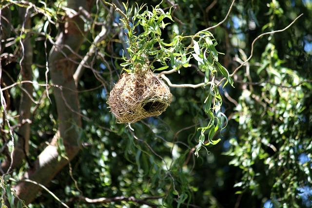 Hay un nido en ese árbol